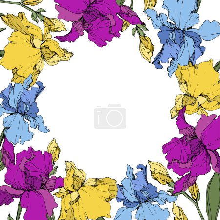 Illustration for Vector purple, blue and yellow irises. Wildflowers isolated on white. Floral frame border with copy space - Royalty Free Image