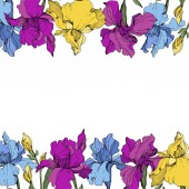 Vector purple blue and yellow irises Wildflowers isolated on white Floral frame border with copy space