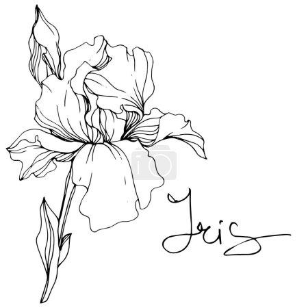 Vektor-Irisblüte. Wildblume isoliert auf weiß. Schwarz-weiß gravierte Tuschekunst mit Iris-Schriftzug