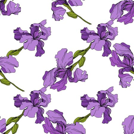 Illustration for Vector purple Irises. Colorful wildflowers isolated on white. Engraved ink art. Seamless background pattern. Wallpaper print texture. - Royalty Free Image