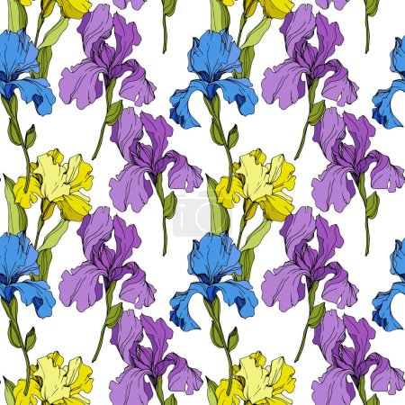Illustration for Vector yellow, blue and purple Irises. Colorful wildflowers isolated on white. Engraved ink art. Seamless background pattern. Wallpaper print texture. - Royalty Free Image