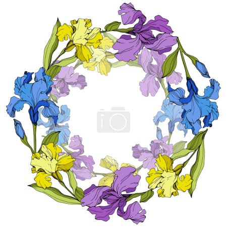 Illustration for Vector Purple, yellow and blue irises. Colorful wildflowers isolated on white. Engraved ink art. Frame border with copy space - Royalty Free Image