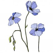 Vector Blue flax Spring wildflowers isolated on white Engraved ink art