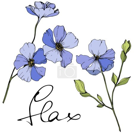 Illustration for Vector Blue flax. Spring wildflowers isolated on white. Engraved ink art with 'flax' lettering - Royalty Free Image
