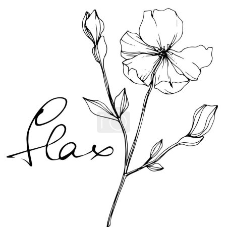 Illustration for Vector Flax. Wildflowers isolated on white. Black and white engraved ink art with 'flax' lettering - Royalty Free Image