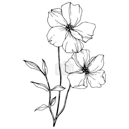 Illustration for Vector Flax. Wildflowers isolated on white. Black and white engraved ink art. - Royalty Free Image