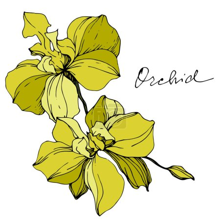 Illustration for Vector yellow orchids isolated on white. Engraved ink art. - Royalty Free Image