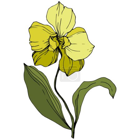 Illustration for Vector yellow orchid with green leaves isolated on white. Engraved ink art. - Royalty Free Image