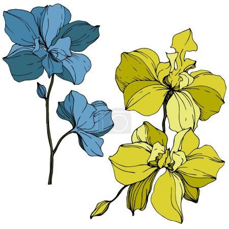 Illustration pour Orchidées vectorielles jaunes et bleues isolées sur blanc. Encre gravée art . - image libre de droit