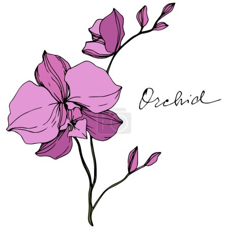 Illustration for Vector purple orchids isolated on white. Engraved ink art. - Royalty Free Image