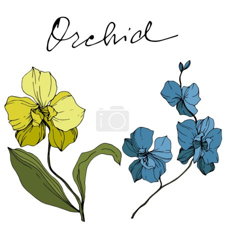 Illustration for Vector yellow and blue orchids isolated on white. Engraved ink art. - Royalty Free Image