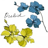 Vector yellow and blue orchids isolated on white Engraved ink art