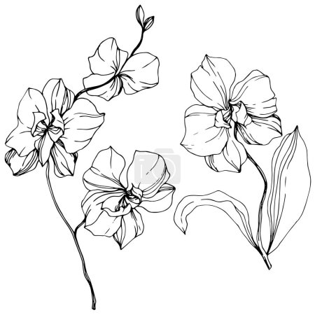 Illustration for Vector monochrome orchids isolated on white. Engraved ink art. - Royalty Free Image