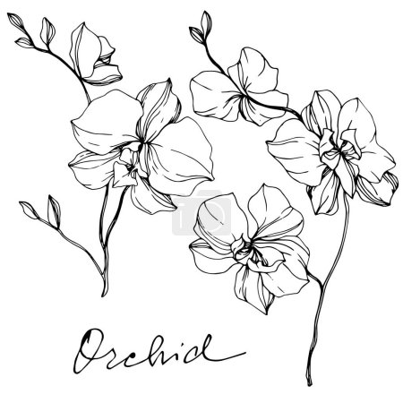 Illustration for Vector monochrome orchids with orchid lettering isolated on white. Engraved ink art. - Royalty Free Image