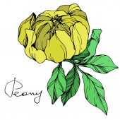 Vector yellow isolated peony flower with green leaves and handwritten lettering on white background Engraved ink art