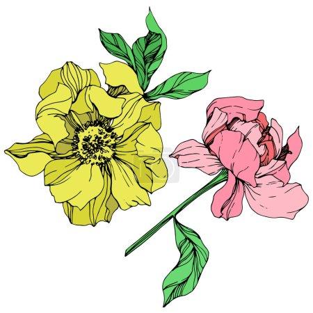 Vektor isolierte rosa und gelbe Pfingstrosen mit grünen Blättern und handgeschriebenem Schriftzug auf weißem Hintergrund. Tuschebilder.