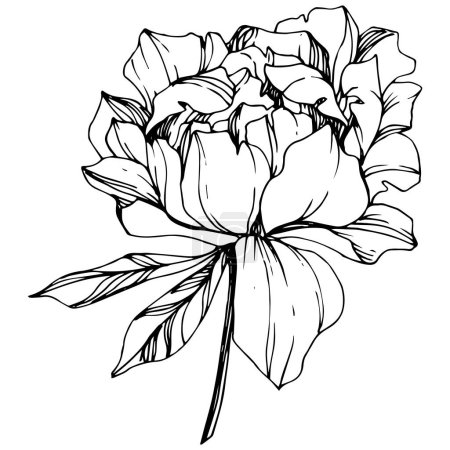 Illustration for Vector isolated monochrome peony flower sketch on white background. Engraved ink art. - Royalty Free Image