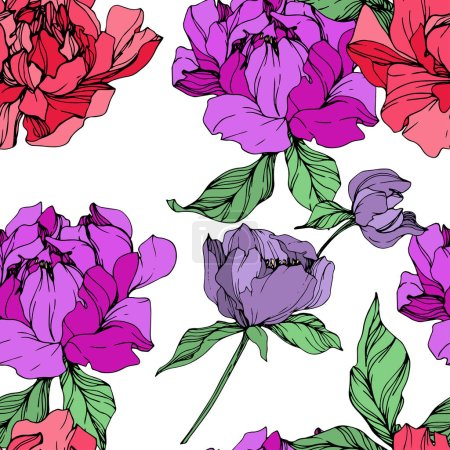 Illustration for Vector purple and living coral isolated peonies illustration on white background. Engraved ink art. Seamless background pattern. Fabric wallpaper print texture. - Royalty Free Image