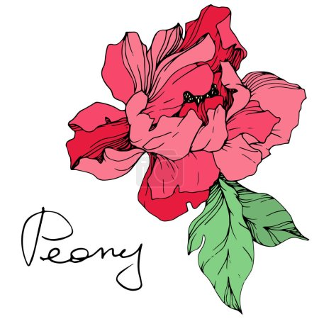 Illustration for Vector isolated living coral peony flower with green leaves and handwritten lettering on white background. Engraved ink art. - Royalty Free Image