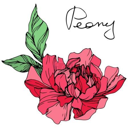 Ilustración de Vector aislado living coral flor peonía con hojas de color verde y letras escritas a mano sobre fondo blanco. Tinta grabado arte - Imagen libre de derechos