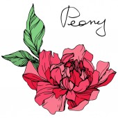 Vector isolated living coral peony flower with green leaves and handwritten lettering on white background Engraved ink art