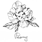 Vector isolated monochrome peony flower sketch and handwritten lettering on white background Engraved ink art