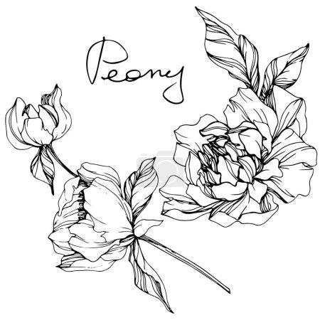 Ilustración de Vector aislado dibujo de flor de peonía monocromo y letras escritas a mano sobre fondo blanco. Tinta grabado arte - Imagen libre de derechos
