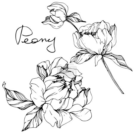 Illustration for Vector isolated monochrome peony flower sketch and handwritten lettering on white background. Engraved ink art. - Royalty Free Image