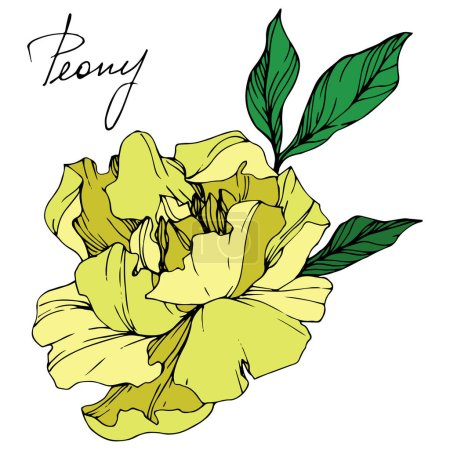 Illustration for Vector isolated yellow peony flower with green leaves and handwritten lettering on white background. Engraved ink art. - Royalty Free Image
