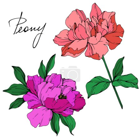 Vector isolated living coral and purple peony flowers with green leaves and handwritten lettering on white background. Engraved ink art.