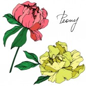 Vector isolated living coral and yellow peony flowers with green leaves and handwritten lettering on white background Engraved ink art