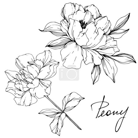 Illustration for Vector isolated monochrome peony flowers sketch and handwritten lettering on white background. Engraved ink art. - Royalty Free Image
