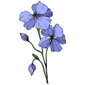 Vector Blue Flax floral botanical flower Wild spring leaf wildflower isolated Engraved ink art Isolated flax illustration element on white background