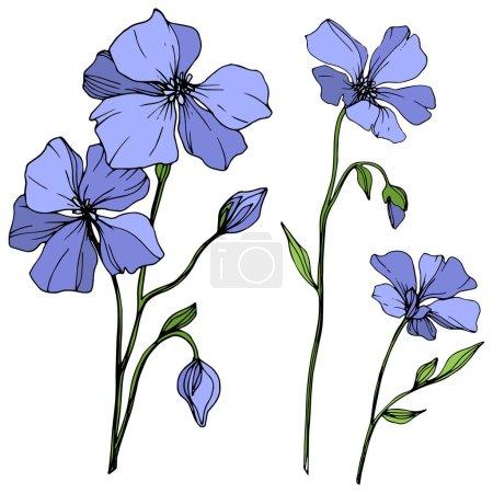 Vektor blauer Flachs florale botanische Blume. wildes Frühlingsblatt Wildblume isoliert. Tuschebilder. isolierte Flachs Illustration Element auf weißem Hintergrund.