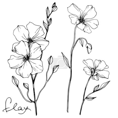Illustration for Vector Flax floral botanical flower. Wild spring leaf wildflower isolated. Black and white engraved ink art. Isolated flax illustration element on white background. - Royalty Free Image