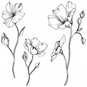 Vector Flax floral botanical flower Wild spring leaf wildflower isolated Black and white engraved ink art Isolated flax illustration element on white background
