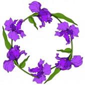 Vector Purple Iris floral botanical flower. Wild spring leaf wildflower isolated. Engraved ink art. Frame border ornament square.