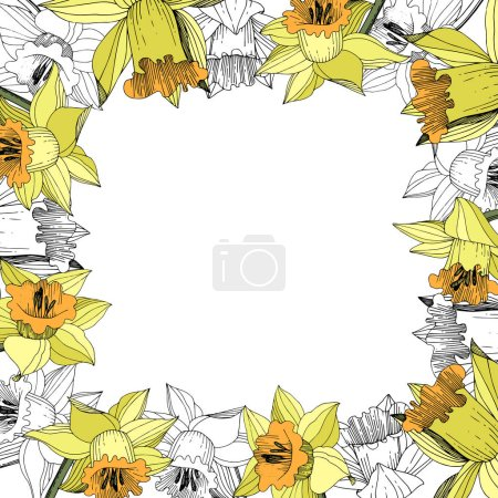 Illustration for Vector Yellow Narcissus floral botanical flower. Wild spring leaf wildflower isolated. Engraved ink art. Frame border ornament square. - Royalty Free Image