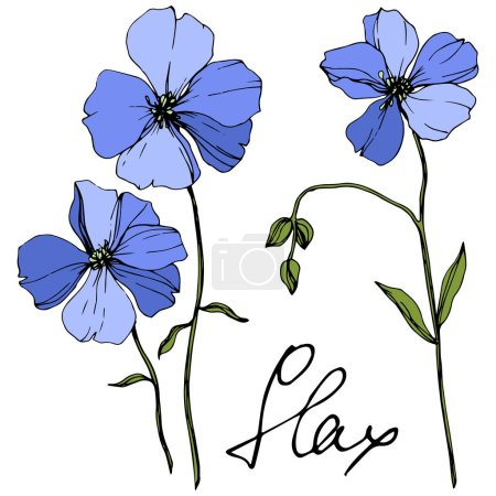 Illustration for Vector Blue Flax floral botanical flower. Wild spring leaf wildflower isolated. Engraved ink art. Isolated flax illustration element on white background. - Royalty Free Image