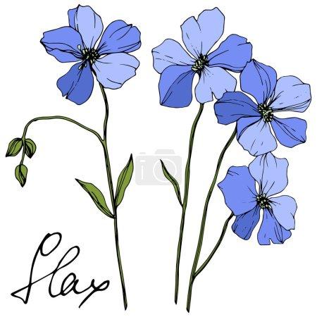 Illustration pour Vector Blue Flax fleur botanique florale. Feuille sauvage de printemps fleur sauvage isolée. Encre gravée. Élément d'illustration isolé en lin sur fond blanc . - image libre de droit