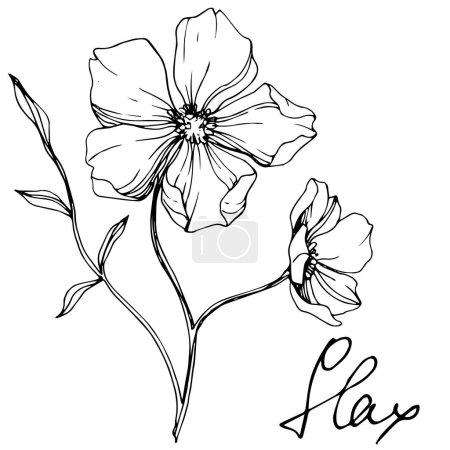Illustration pour Vector Flax fleur botanique florale. Feuille sauvage de printemps fleur sauvage isolée. Encre gravée en noir et blanc. Élément d'illustration isolé en lin sur fond blanc . - image libre de droit