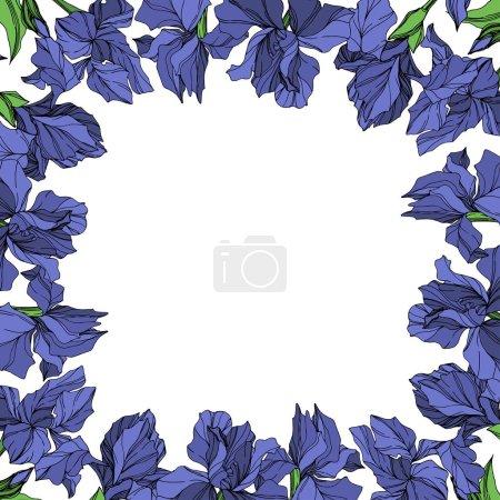 Illustration pour Vecteur bleu iris botanique fleur floral sur fond blanc. Wildflower de feuille de printemps sauvage isolé. Art d'encre gravé bleu et vert. Place de cadre bordure ornement. - image libre de droit