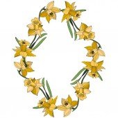 Vector Yellow Narcissus floral botanical flower Wild spring leaf wildflower isolated Egraved ink art Frame border ornament square
