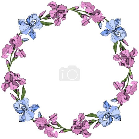 Illustration pour Vecteur Fleur botanique florale iris rose et bleu. Feuille sauvage de printemps fleur sauvage isolée. Encre gravée. Cadre bordure ornement carré . - image libre de droit