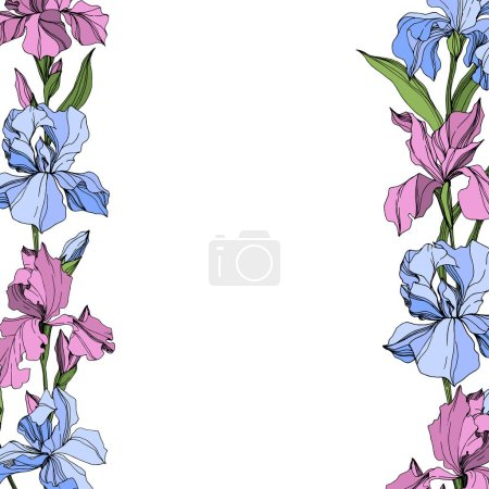 Illustration for Vector Pink and blue iris floral botanical flower. Wild spring leaf wildflower isolated. Engraved ink art. Frame border ornament square. - Royalty Free Image