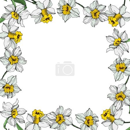 Illustration for Vector White narcissus flowers with green leaves. Engraved ink art on white background. Frame border ornament with copy space. - Royalty Free Image