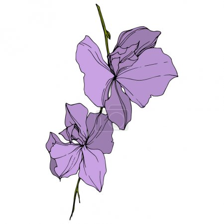 Illustration for Vector violet orchid flowers isolated on white. Engraved ink art. - Royalty Free Image