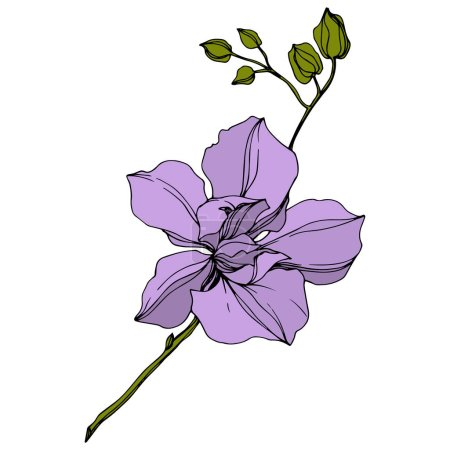 Illustration for Vector violet orchid flower isolated on white. Engraved ink art. - Royalty Free Image