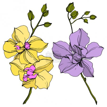 Illustration for Vector yellow and violet orchid flowers isolated on white. Engraved ink art. - Royalty Free Image
