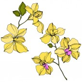 Vector yellow orchid flowers isolated on white Engraved ink art